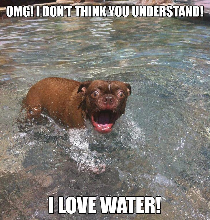 Funny Meme About Drinking Water : Amazing funny water pictures and images