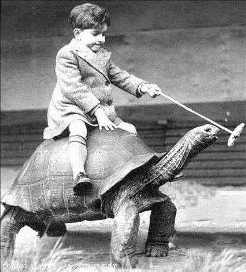 Kid Riding Tortoise Funny Vintage Image