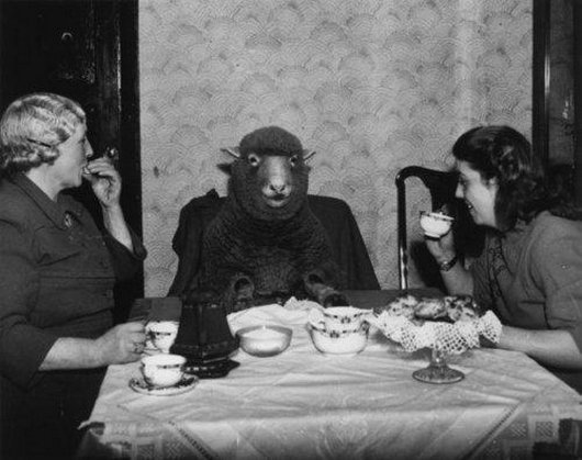 Ladies Enjoying Tea With Sheep Funny Vintage Image
