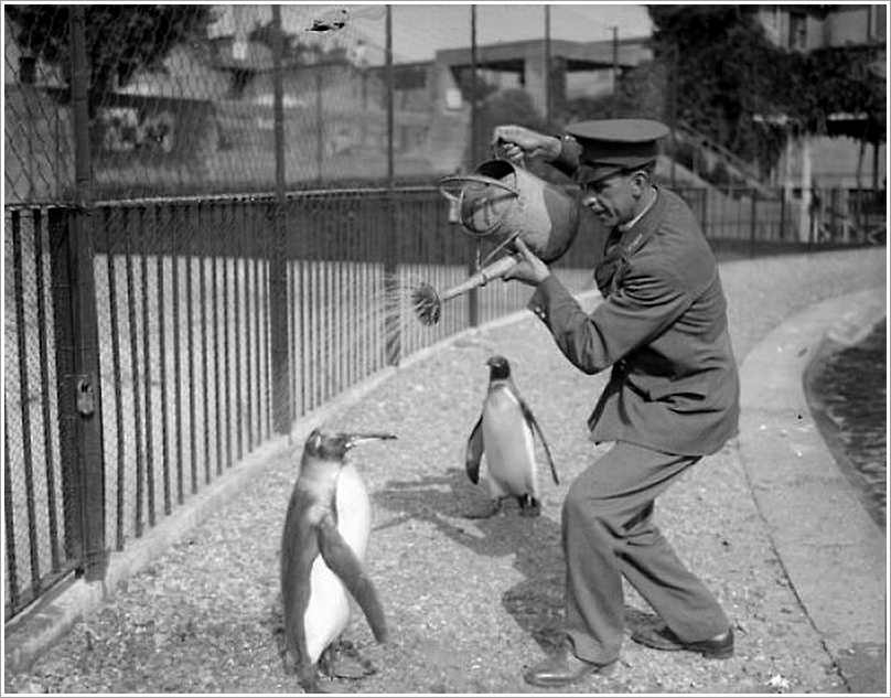 Man Watering Penguin Funny Vintage Picture