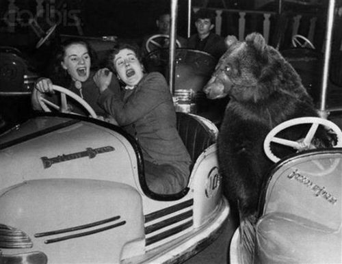 Men And Bear In Swing Funny Vintage