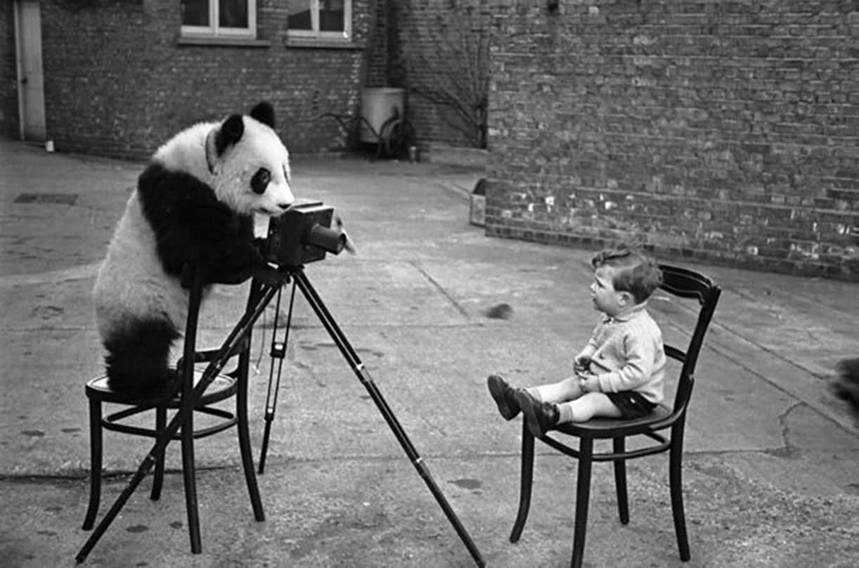 Panda Bear Taking Kid Photo Funny Vintage