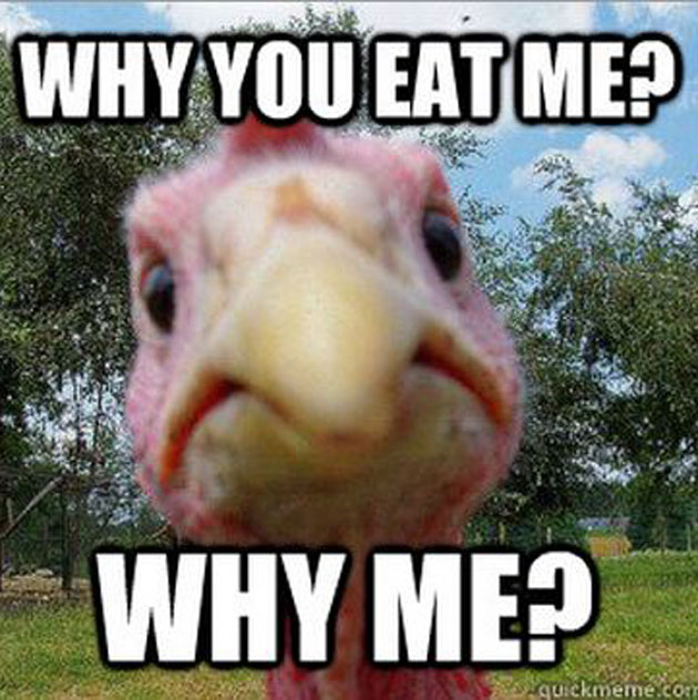 Why You Eat Me Why Me Funny Sad Chicken Image