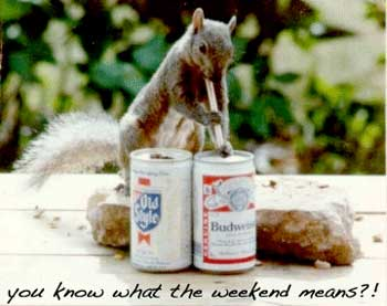 25 very funny greetings pictures and images squirrel weekend funny greeting m4hsunfo Images