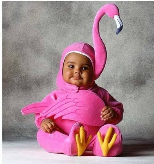 Black Baby With Pink Swan Costume Funny Image