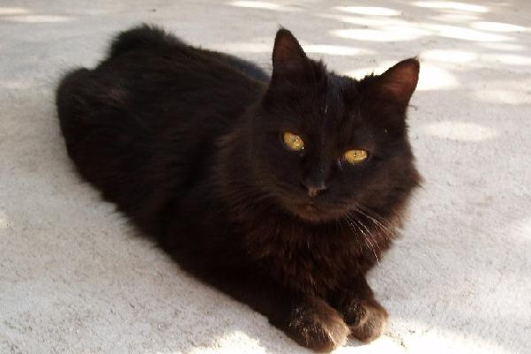 Black Cat Sitting In Front Of House