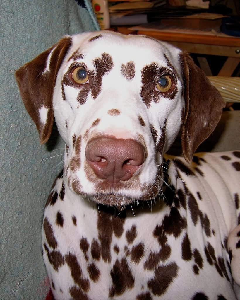 Dog With Brown Spots Under Eyes