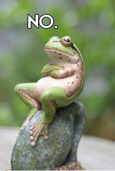 Funny Pic Dump 8 26 15: Frog Say No Funny Picture