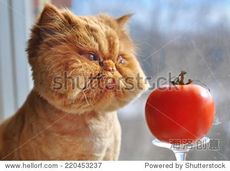 cartoon pictures of cat