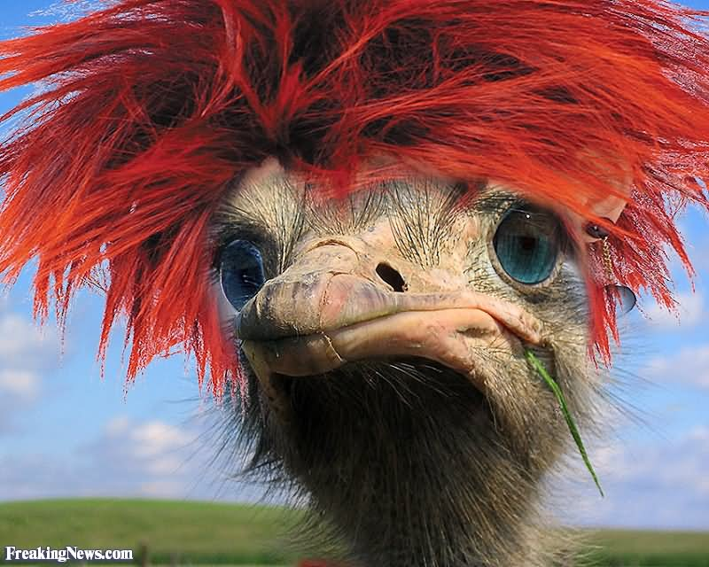 Funny-Ostrich-With-Red-Hair.jpg