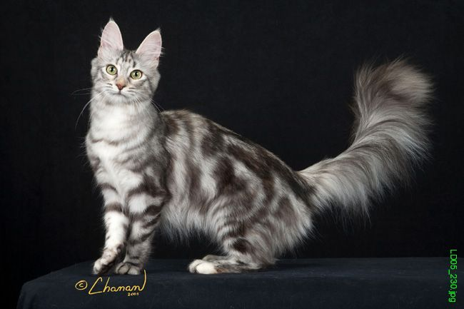 [discussion] Are Persian cats the best cat breed? - The ...