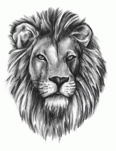 82 famous lion tattoo design sketches for Lion head tattoo
