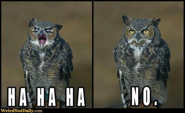 Ha-Ha-Ha-No-Funny-Owl-Picture.jpg