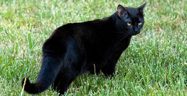 Black Cat Quotes Cross
