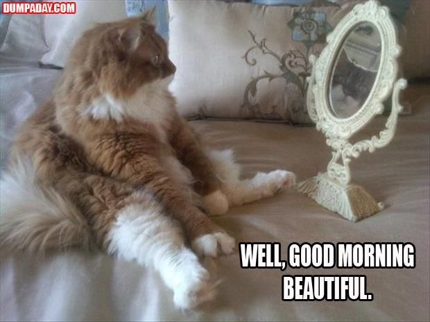 Cat Well Good Morning Beautiful Mirror Funny Image