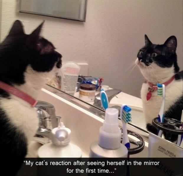 Funny Bathroom Mirror Quotes 25 most funny mirror pictures and photos