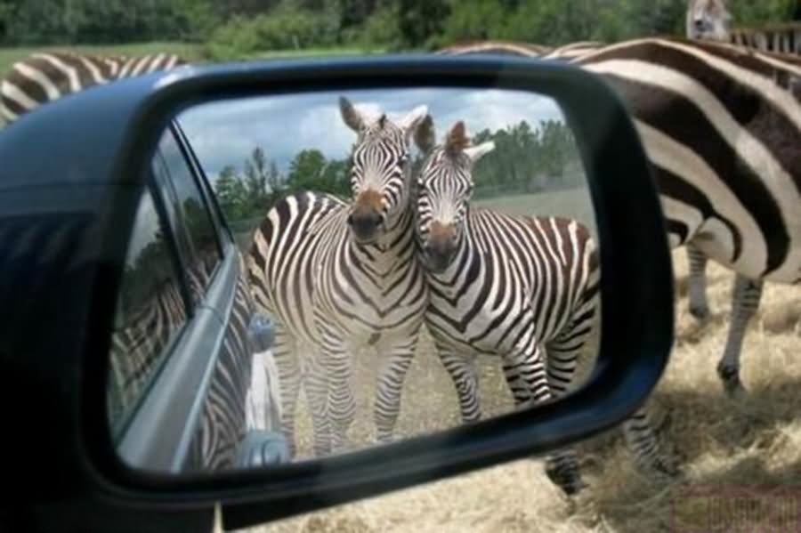 Most Funny Mirror Pictures And Photos