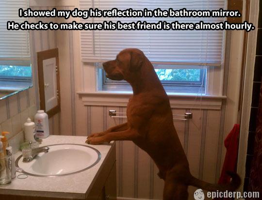 25 Most Funny Mirror Pictures And Photos