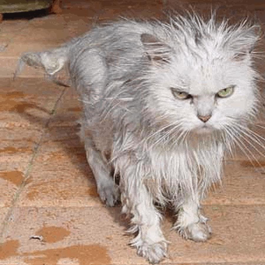 angry wet dog - 900×900