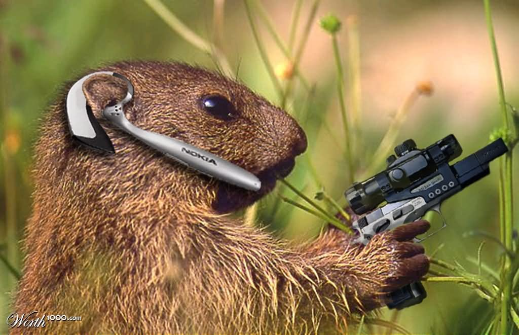 Bunny-With-Gun-Funny-Picture.jpg