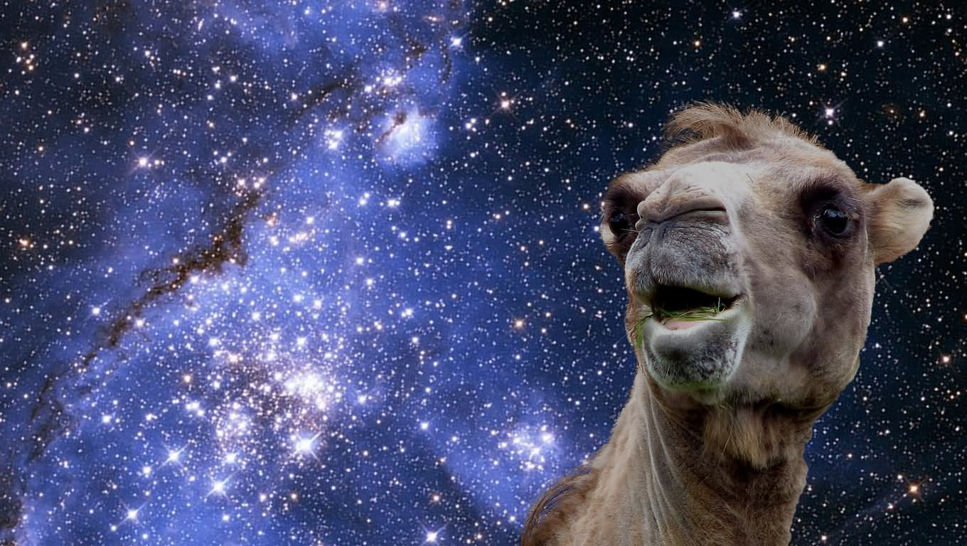 Camel In Space Funny Photoshopped Picture