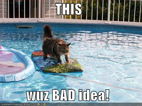 Cat funny surfing in swimming pool - Draining a swimming pool may be a bad idea ...