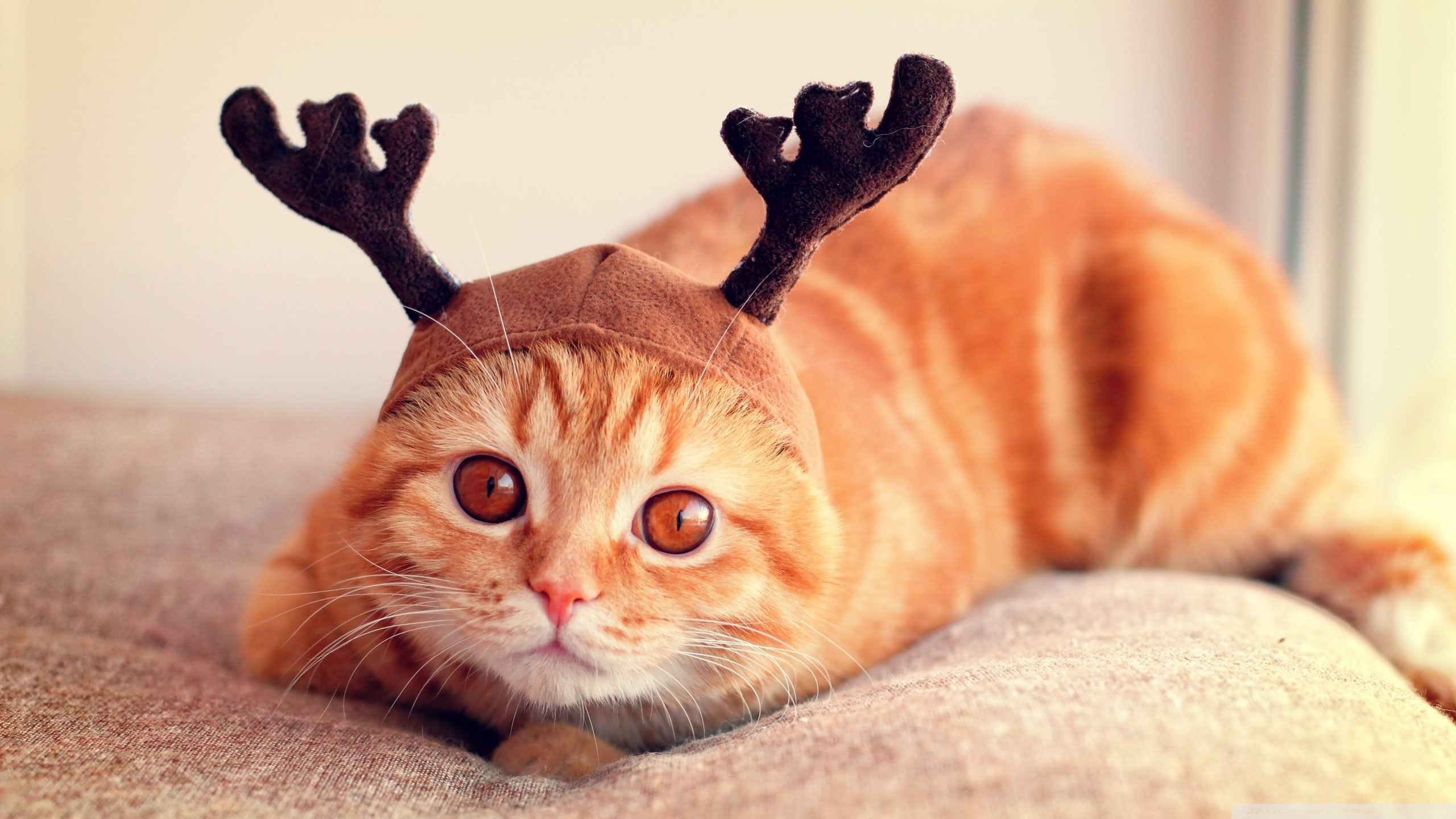 Funny Reindeer Meme : 15 most funny reindeer photos and images