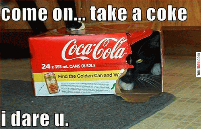 https://www.askideas.com/media/24/Come-On-Take-A-Coke-I-Dare-U-Funny-Cat-Picture.png