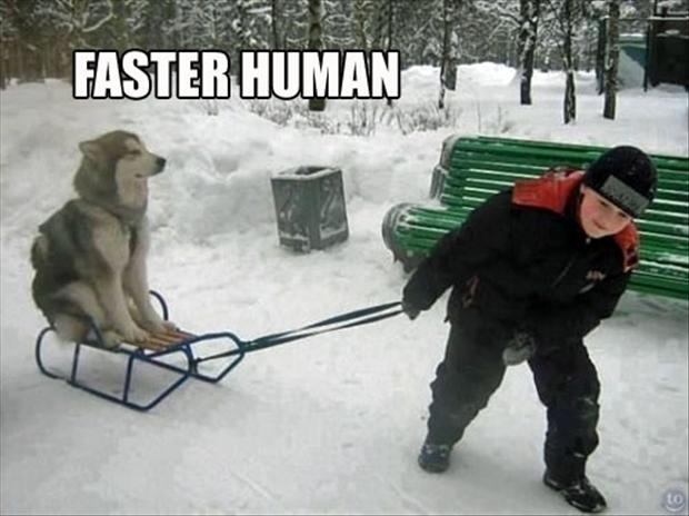 Dog On Sled Faster Human Funny Picture