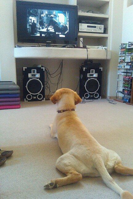 Hasil gambar untuk funny dog watching tv
