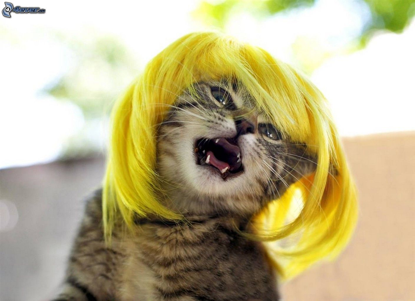 20 Very Funny Blonde Photos And Pictures