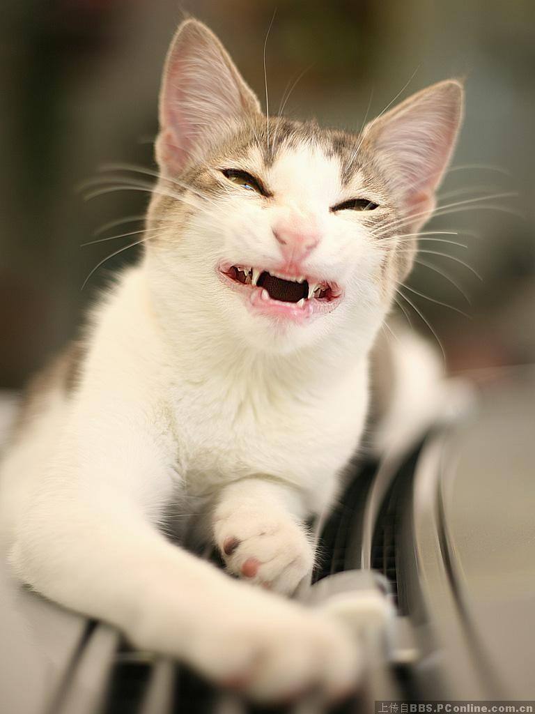Funny-Cat-Open-Mouth-Smiling-Picture.jpg