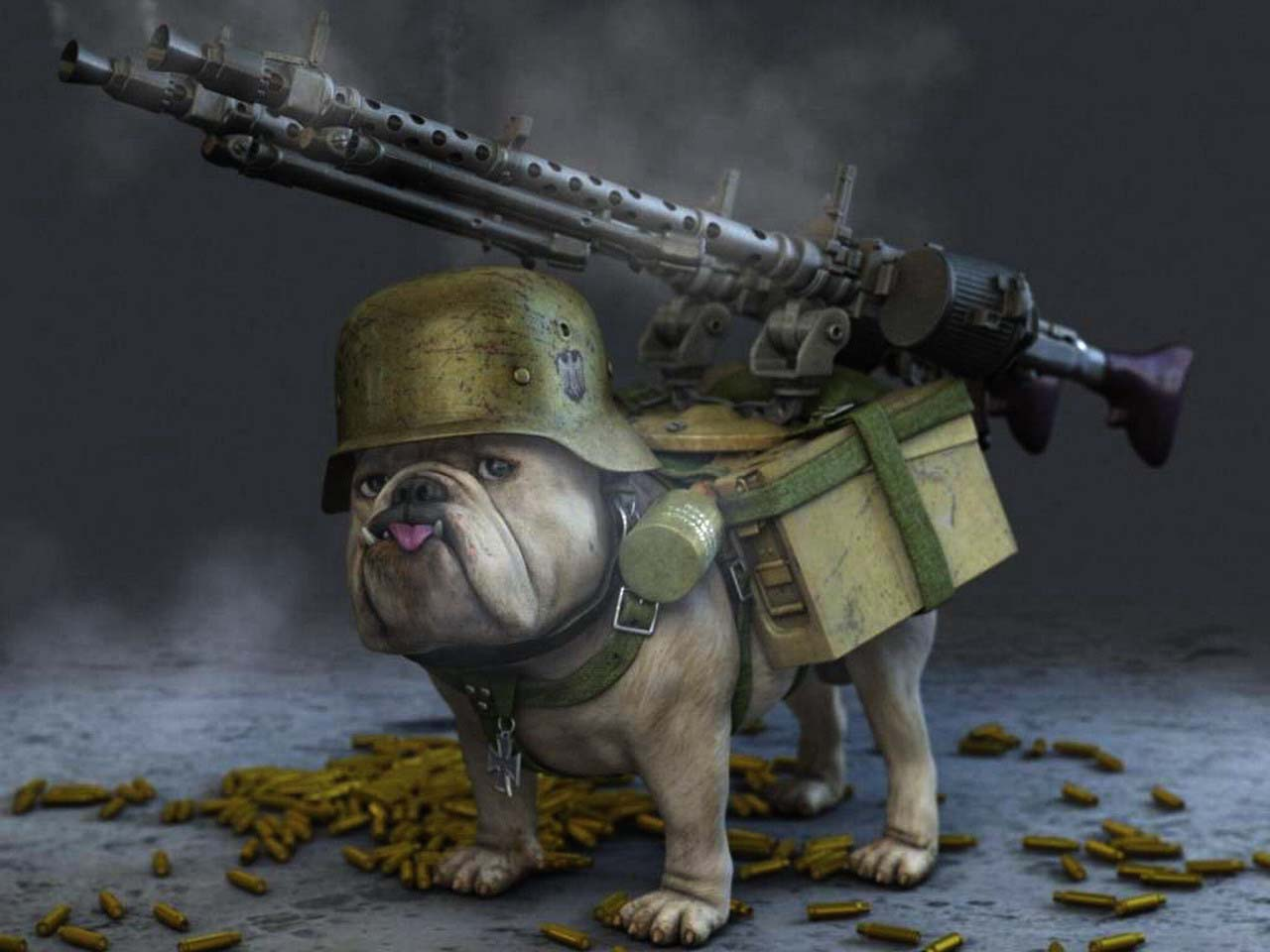 Dog Carrying Cat With Gun Image