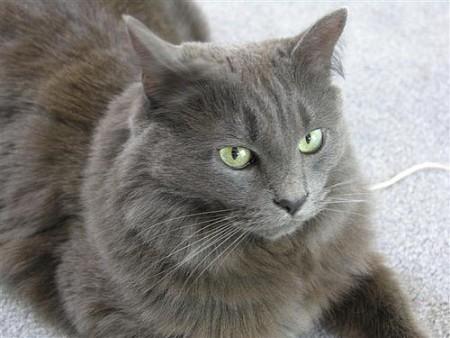 2012 arctic cat wildcat