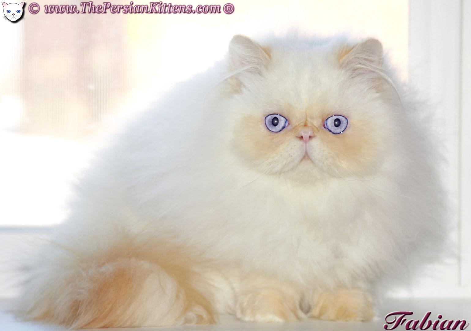 worlds best cat litter 28 lbs
