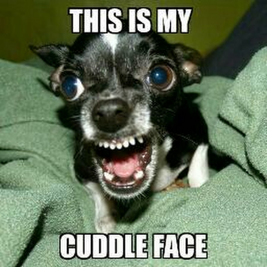 This Is My Cuddle Face Funny Meme 75 most funniest smile pictures,Memes Funny Faces
