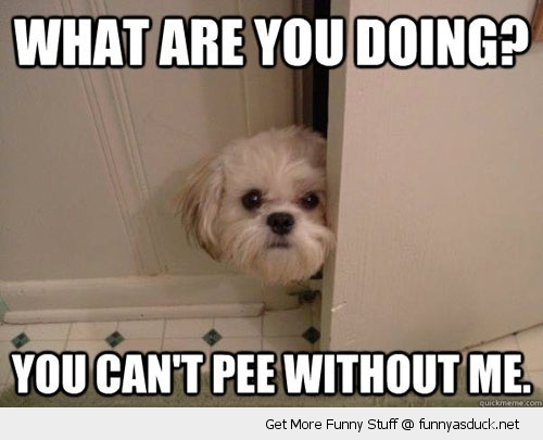 Funny Dog Meme Images : You can't pee without me funny dog meme