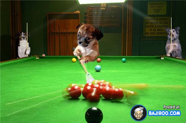 Billiards Dog Pictures