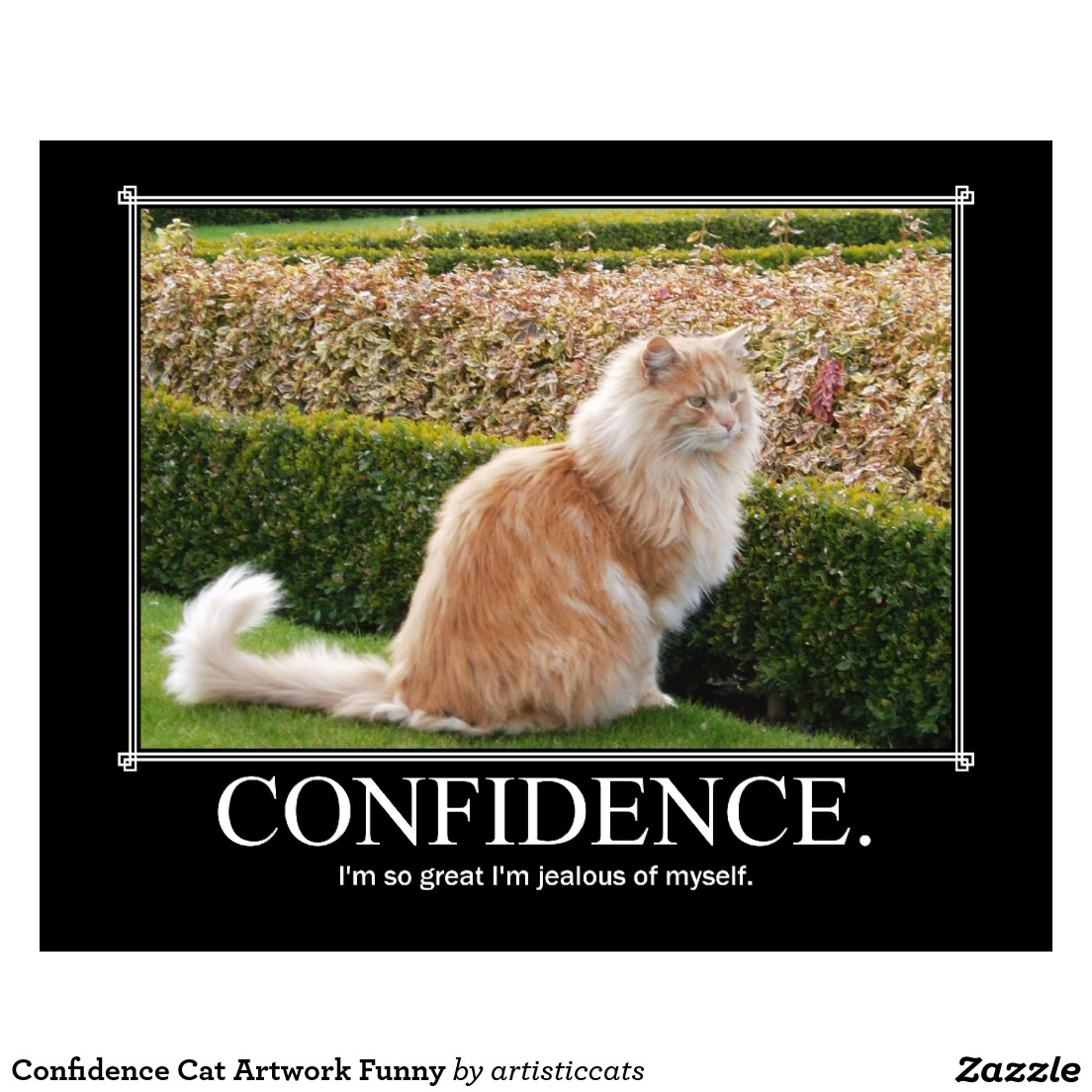 Funny Cat Confidence Picture