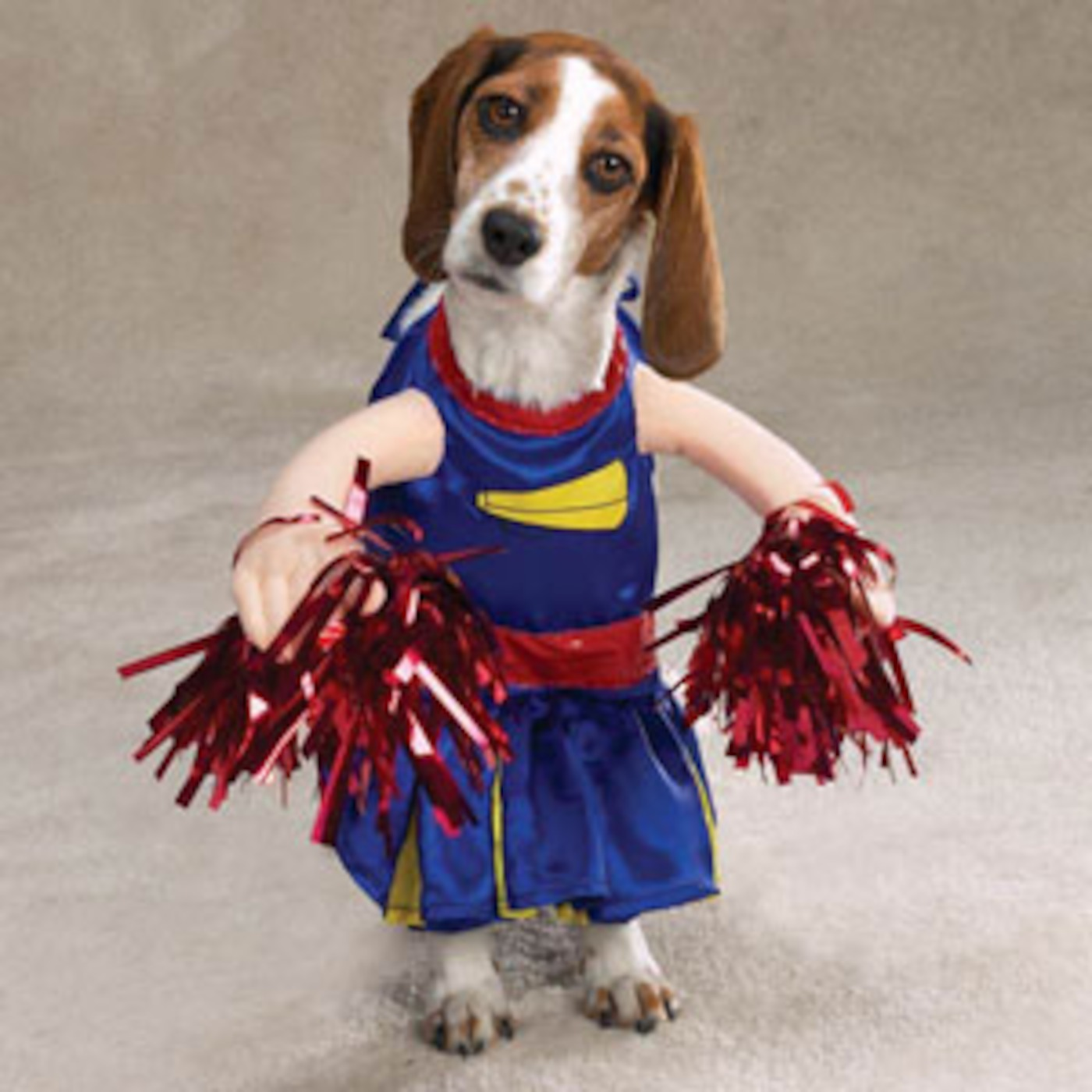 Funny Dog Cheerleader Picture