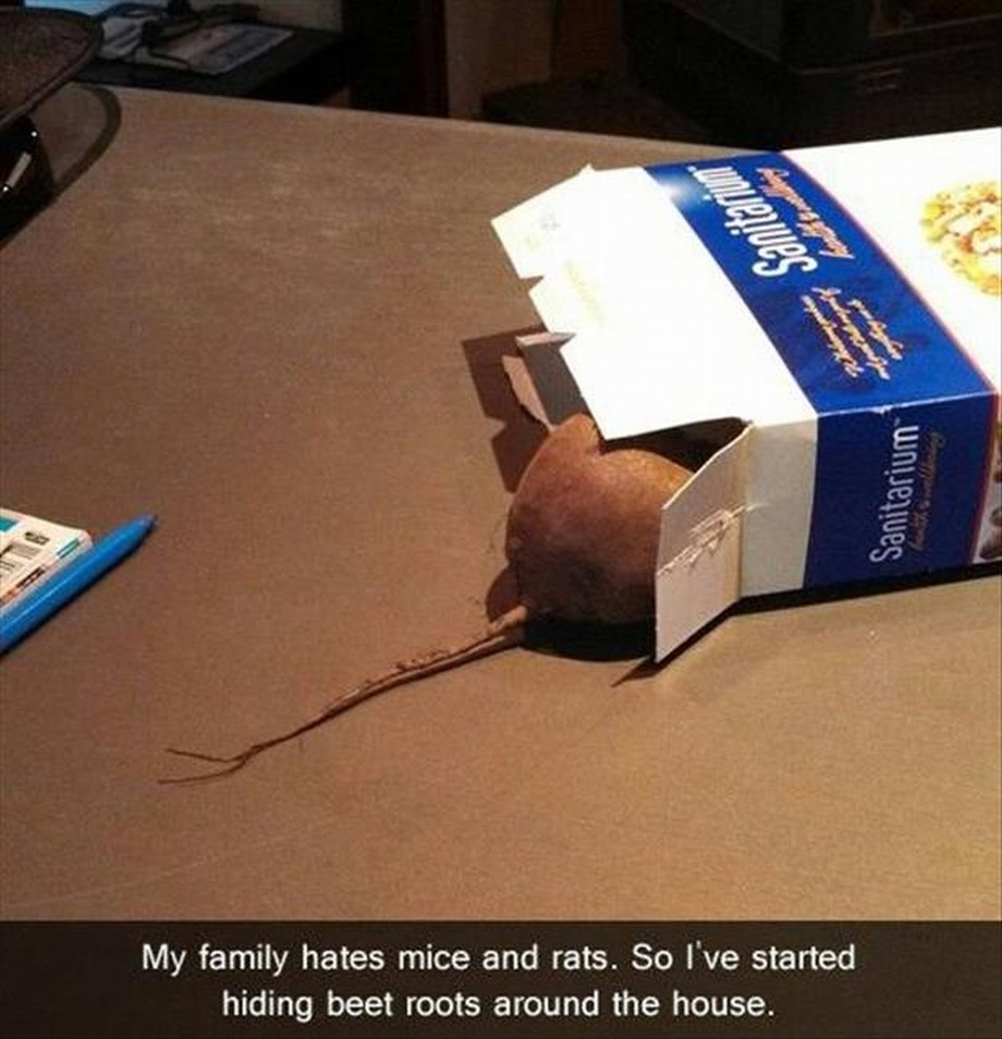 May Family Hates Mice And Rats Funny Prank Image