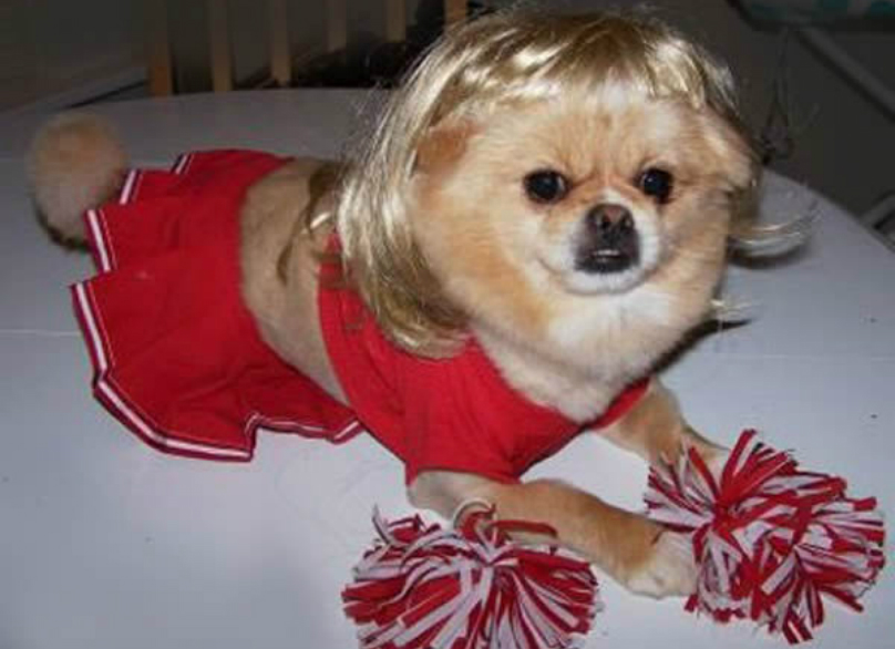 Puppy In Cheerleader Costume Funny Picture