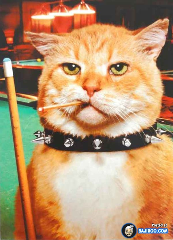 Incredible 25 Most Funny Snooker Photos And Pictures Funny Birthday Cards Online Drosicarndamsfinfo