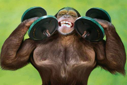 Funny Muscle Monkey Weightlifting Picture