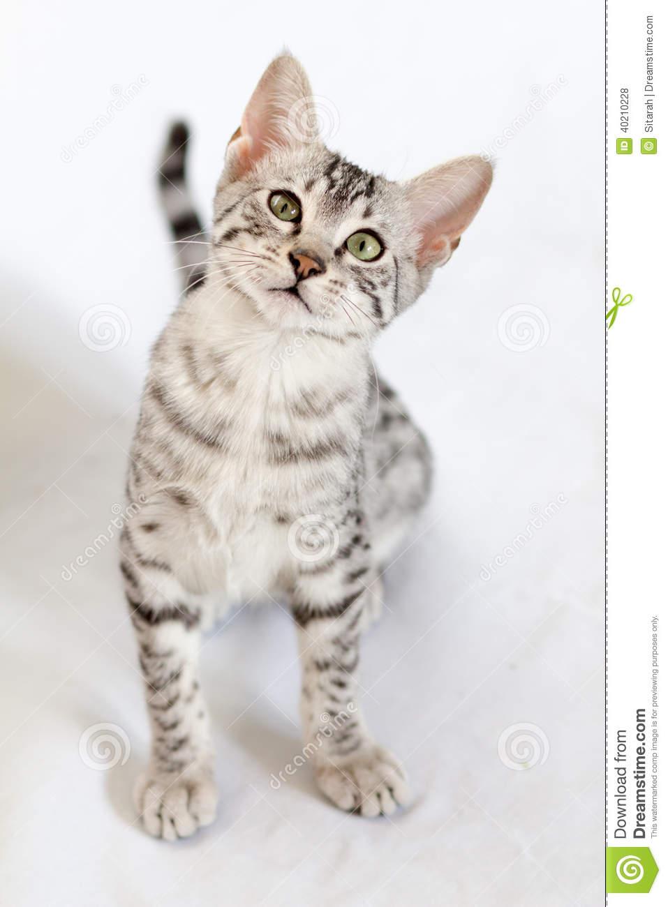 Best Savannah Kitten Food
