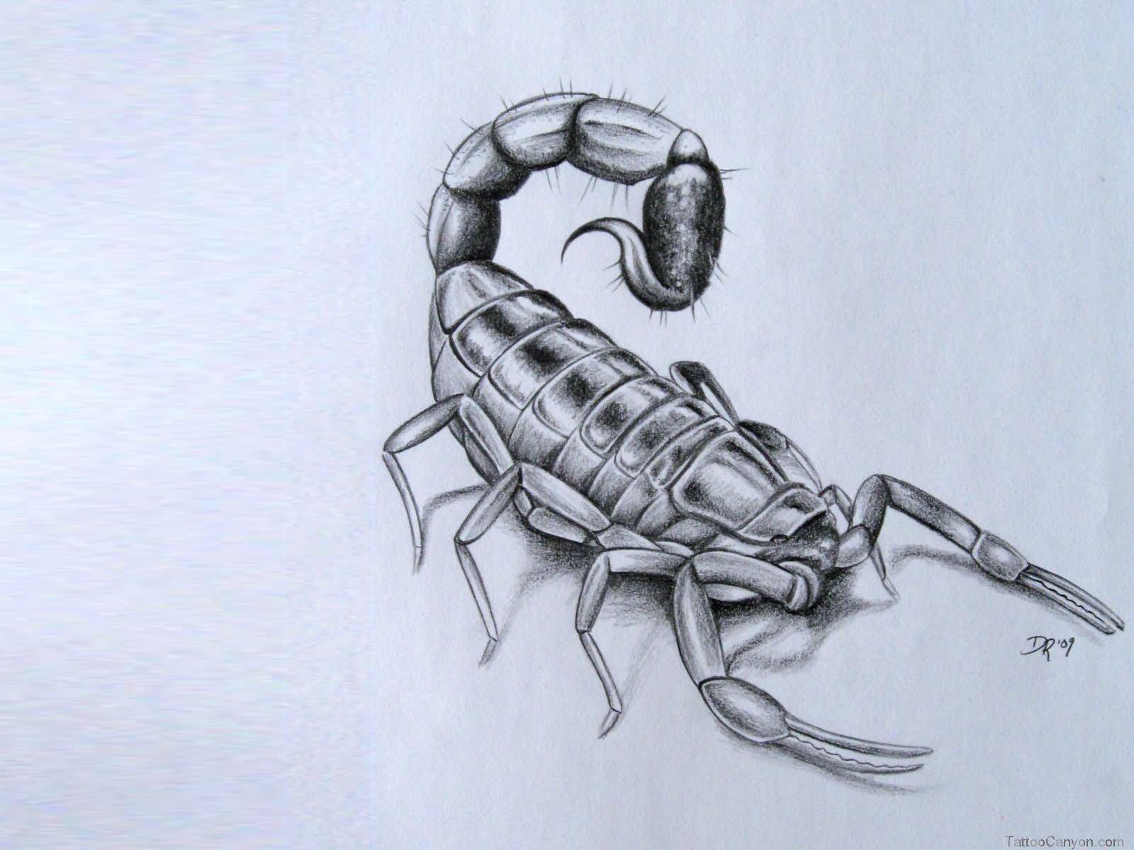 3d scorpion tattoo designs - Black And Grey 3d Scorpion Tattoo Design
