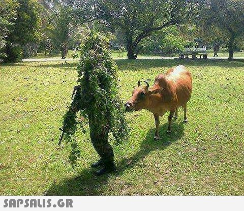 Cow-Eating-Funny-Camouflage-Grass-Man.jp