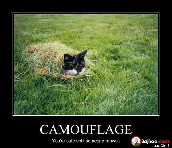 45 Very Funny Camouflage Pictures And Images