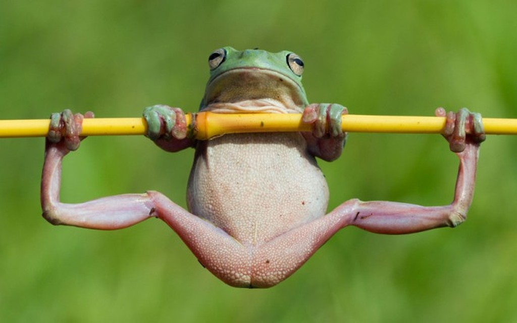 Funny Frog Cartoon Meme : 20 most hilarious gymnastic pictures and images