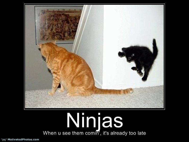 funny ninja quotes